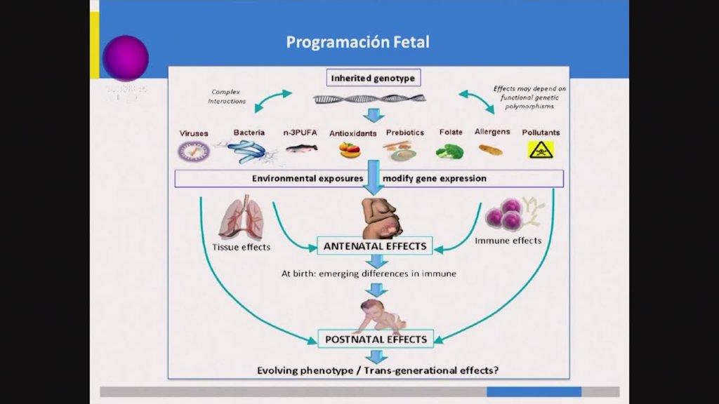 Los misterios de la epigenética