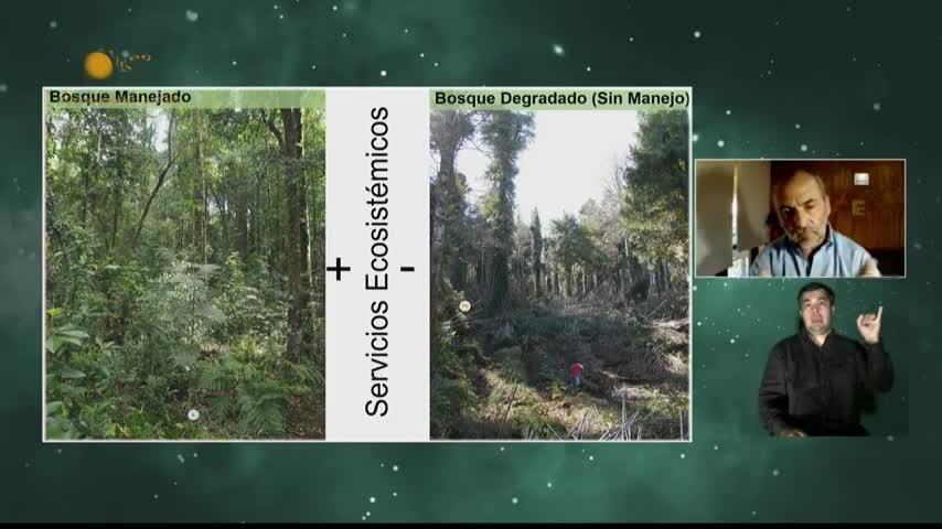 Manejo de Bosques Nativos en Chile: Una urgencia local y una responsabilidad global