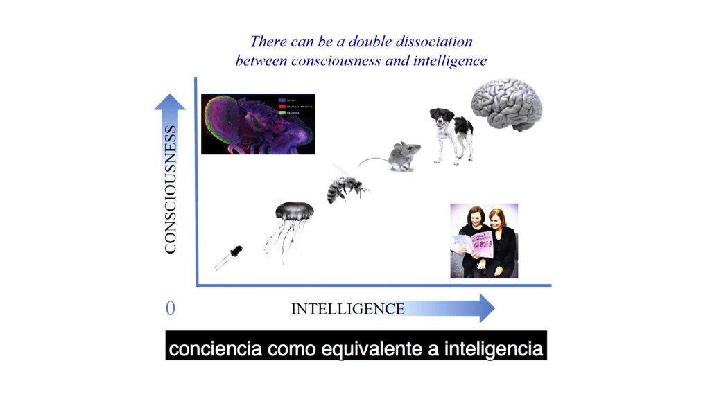 Las fronteras de la conciencia humana